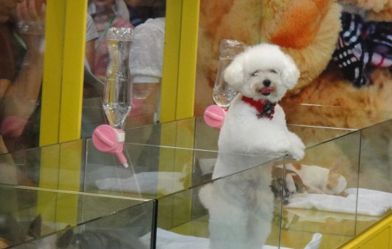 2018年广州国际宠物产业博览会