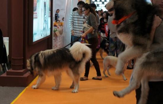 2017年俄罗斯圣彼得堡宠物用具展览会
