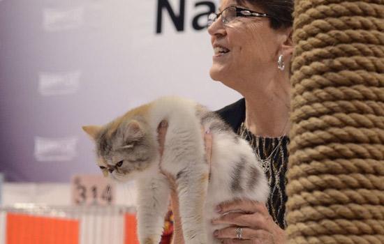 2018年意大利帕多瓦猫展